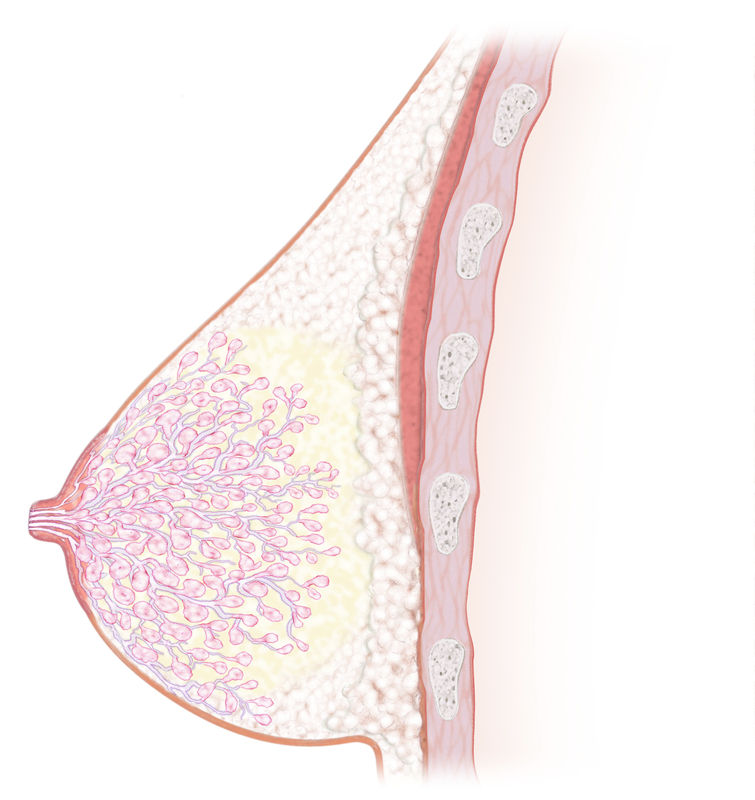 breast_anatomy_sideview_2014
